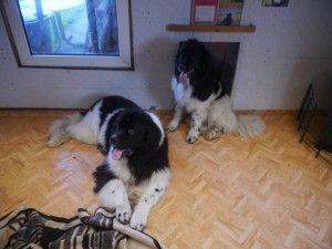 Onze zwart witte pups